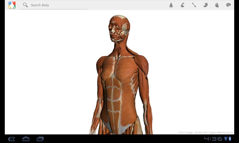 Google\'s Human Body Browser Is Now Available (Again) For Honeycomb ...