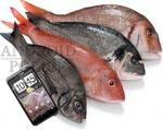 thunderbolt fishy