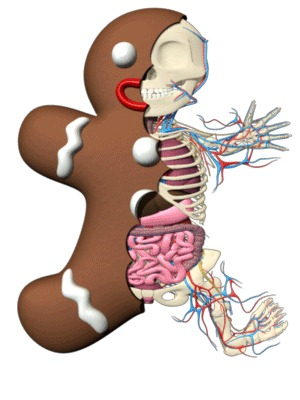 gingerbread_anatomy