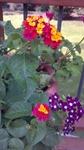 2011-09-14_16-24-10_679
