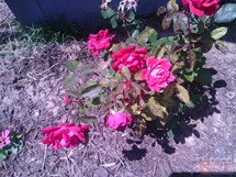 wm_2012-04-27 13.34.11