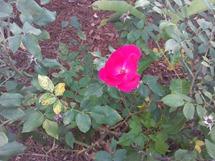 IMG_20120514_190824