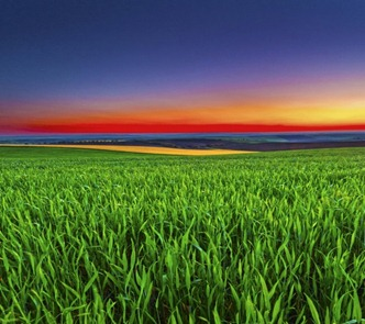 Fields-of-Green-620x551