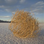 tumbleweed-on-the-bonneville-salt-john-burcham