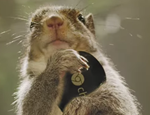 2014-04-01 10_48_13-Chromecast_ A New Era of Squirrel Entertainment - YouTube