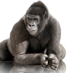 Corning-introduces-3D-shaped-Gorilla-Glass