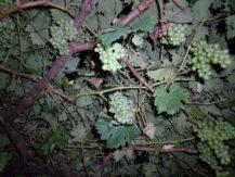 iblazr-2-sample-vine-diffuser-white