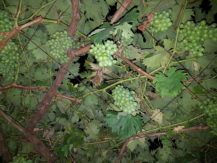 iblazr-2-sample-vine-flash-2