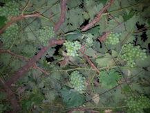 iblazr-2-sample-vine-iblazr-flash