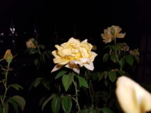 iblazr-2-sample-yellow-flower-diffuser-flash
