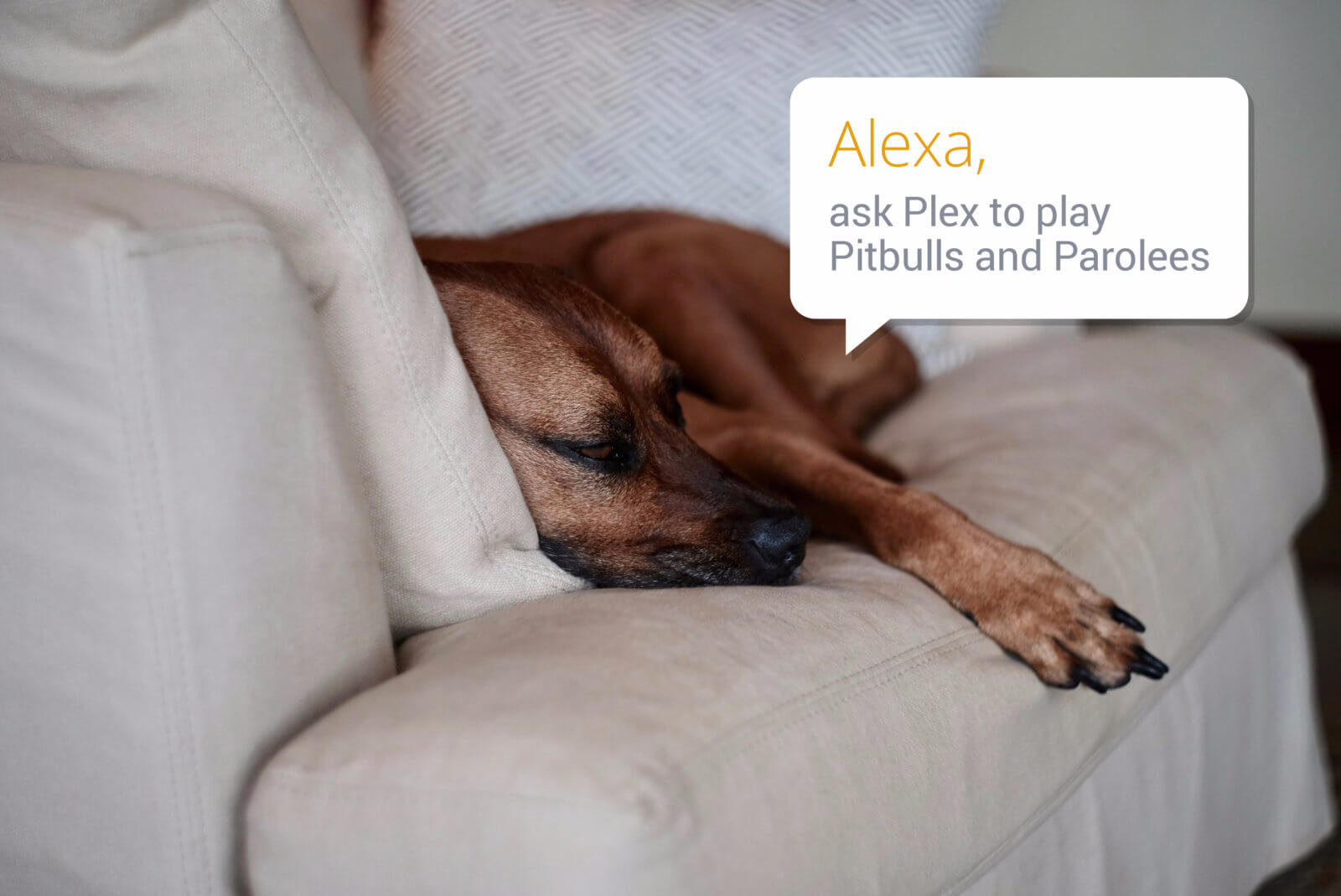 Plex gets Alexa support for the ultimate home theater experience