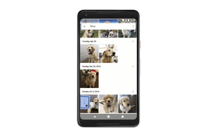 Google Photos now automatically organizes photos of your pet