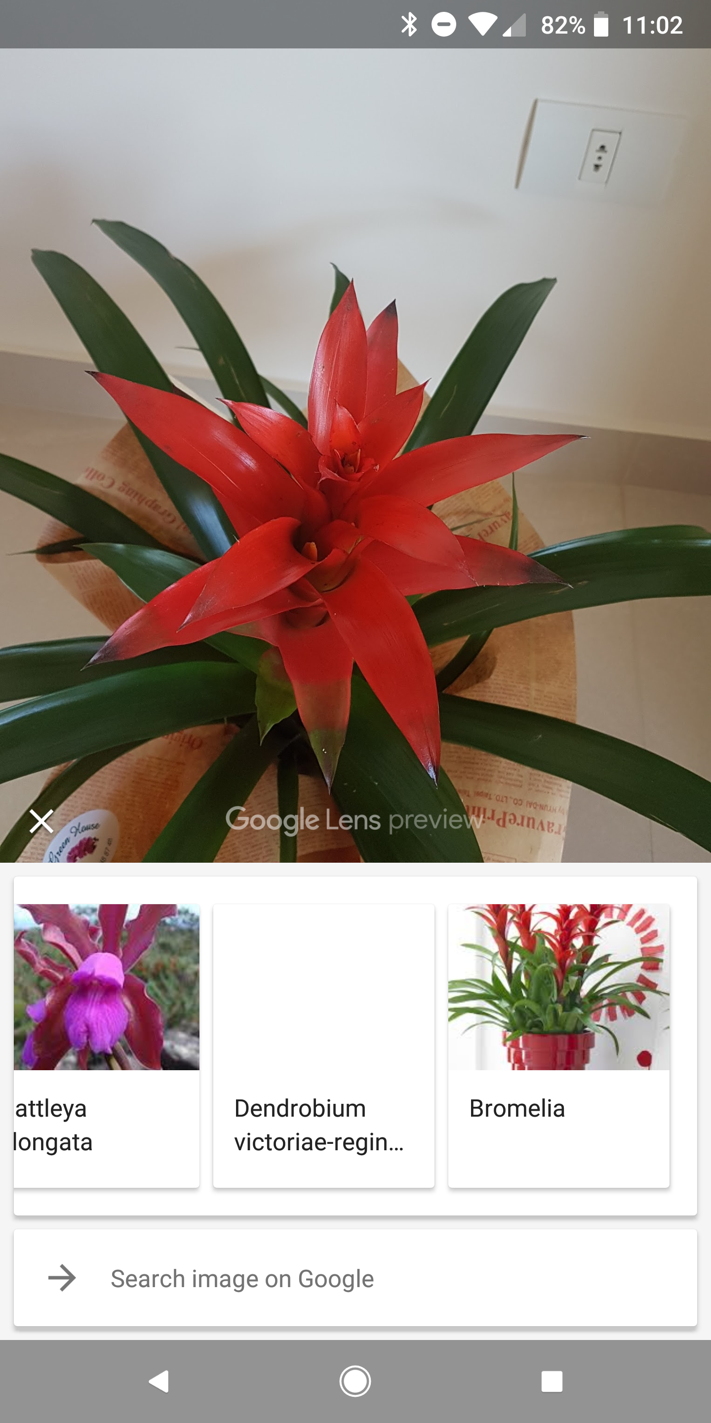 tips google lens in photos can now identify animals and plants and