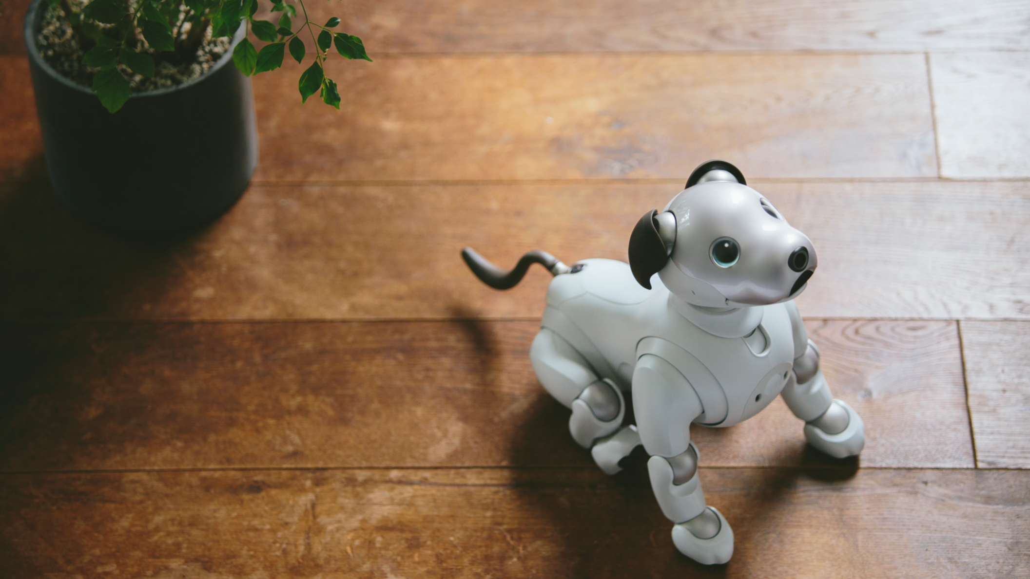 Update Pre Orders Open Sonys Robotic Puppy Aibo Is Coming To The