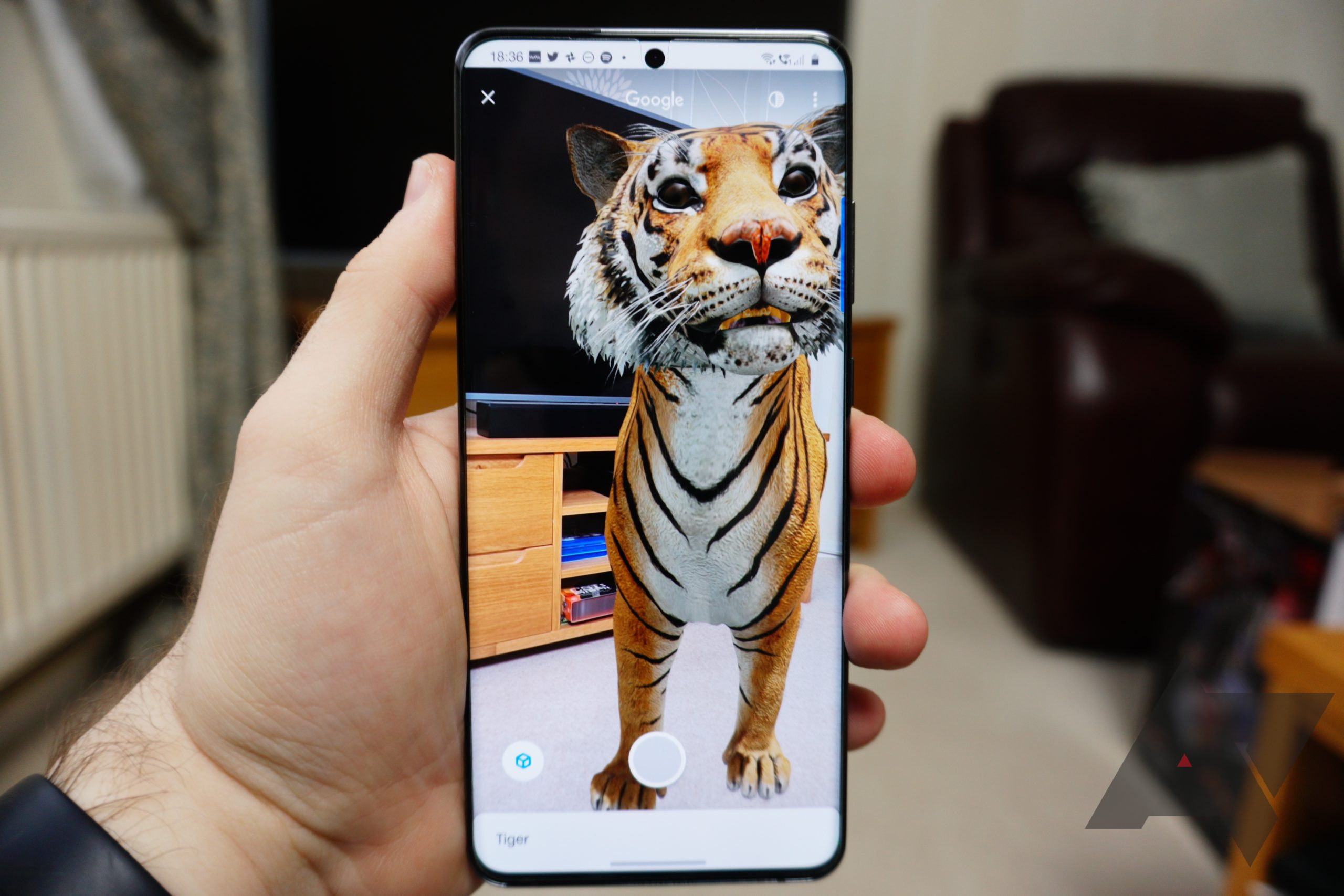 Play Tiger King at home with over 30 Google 3D animals